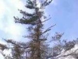 Diagnosing Ice Storm Related Tree Damage
