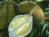Trying Durian Fruit And Reflexology In Malaysia