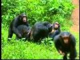 Anjelica Huston Speaks Up For Great Apes