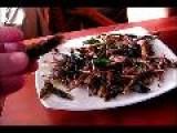 Bug Eating Show Koh Samui Thailand
