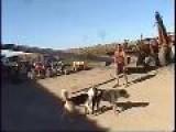 Davidsfarm - 0331 - ZfuVn5EfjVo - HQ - Pole Climbing Dog