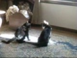 Cat Fight !!! I Filmed It