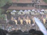 Kerala Pooram Elephant Show