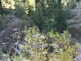 Quaking Fall Aspens Hiking Path