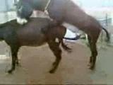 Donkey,sex