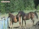 Horse Breeding