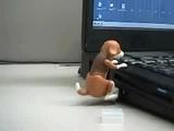 Chien Chaud Clé USB