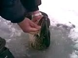 Russian Ice Fishing - Bare Handed!