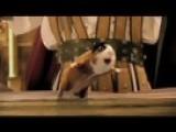 Hamster Dances With Adam Sandler