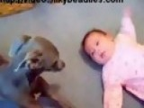Dog Makes A Good Babysitter