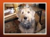 It's Todd's Show Ep33 DOG WALKER IN HEAT & PUP GROOMING
