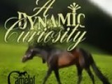 Horse Breeding- A Dynamic Curiosity-Camelot Stallion Station