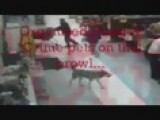 Dog Shoplifter Gets Caught On Tape Stealing Item & Gets Away!