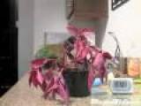 30 Minute Plant Resuscitation